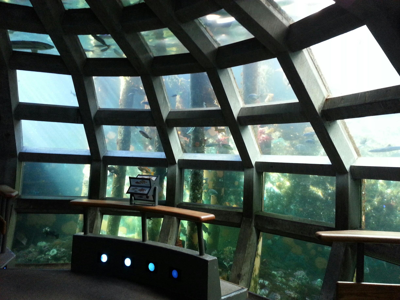 In the Seattle Aquarium