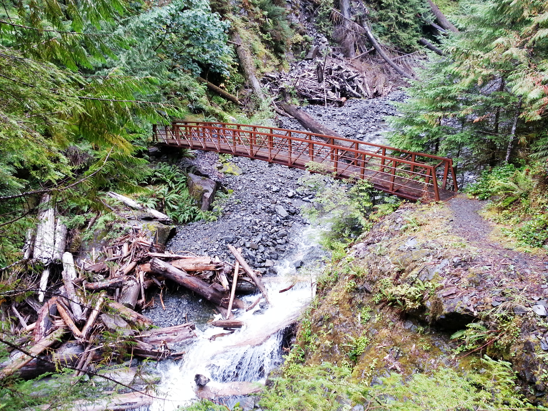 Hiking in Quinault Rainforest