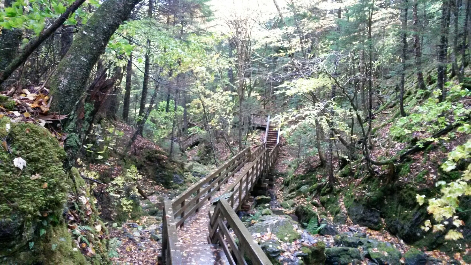 Boardwalk trail to Dickson Falls