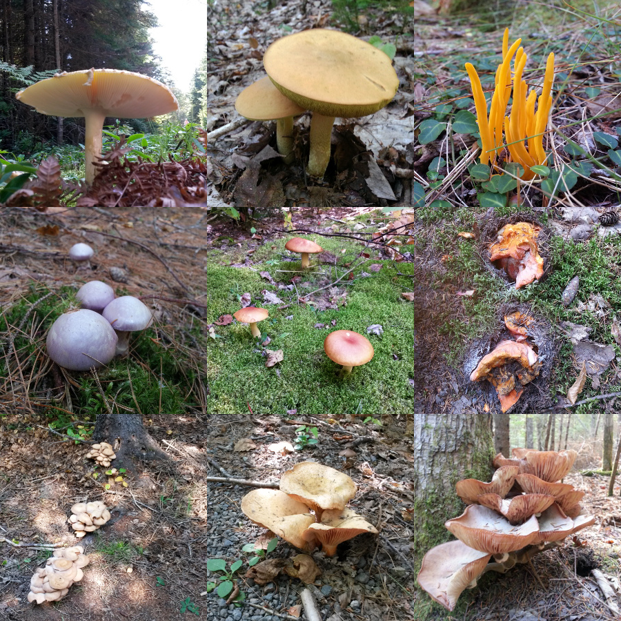 Gallery of mushrooms seen at Kouchibouguac National Park