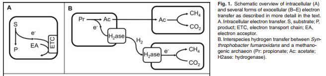 Figure 1 excerpt