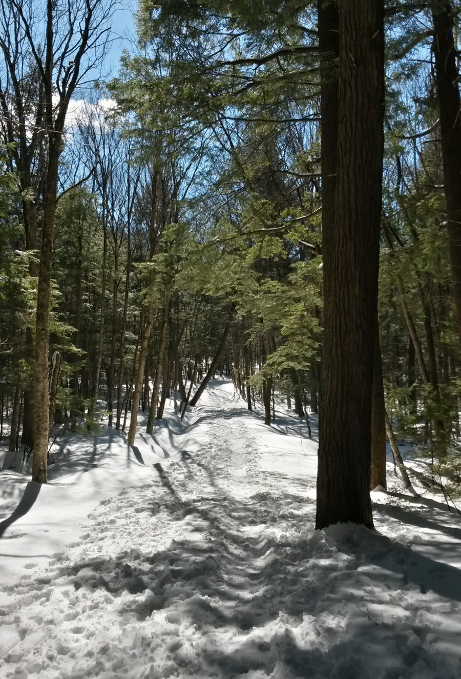 Snowshoeing in Odell Park