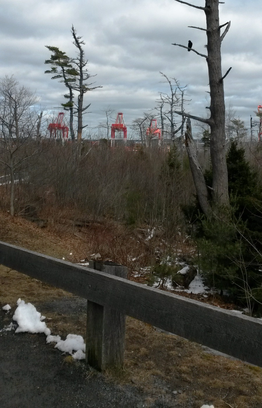 Container port in background, Point Pleasant Park