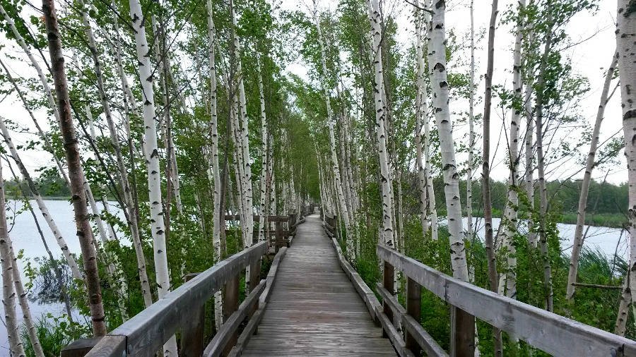Boardwalk in Sackville Waterfowl Park